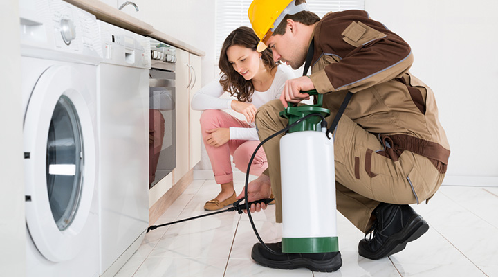 Reliable Pest Control in Bentonville AR